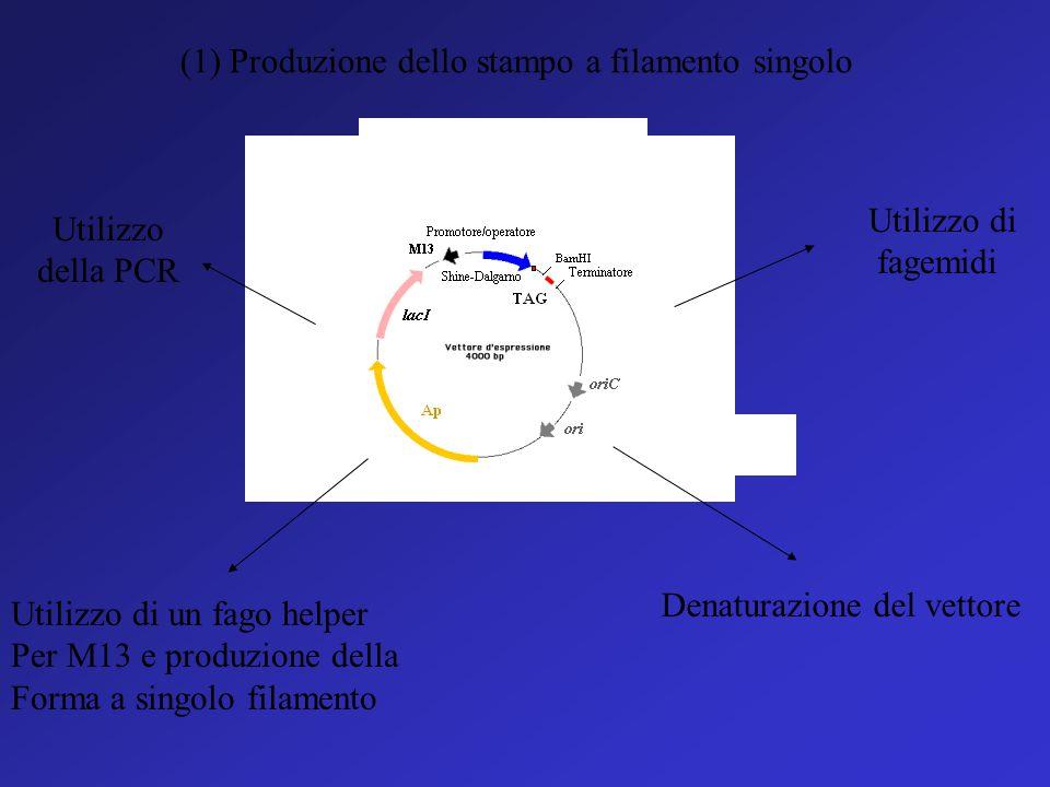 (1) Produzione dello stampo a filamento singolo