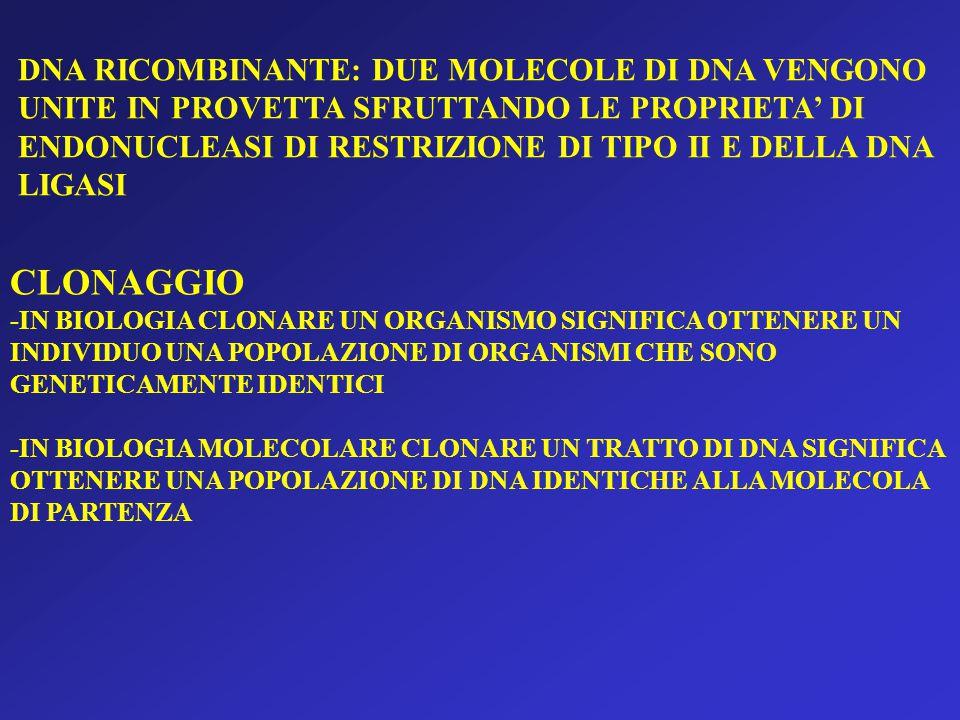 CLONAGGIO DNA RICOMBINANTE: DUE MOLECOLE DI DNA VENGONO