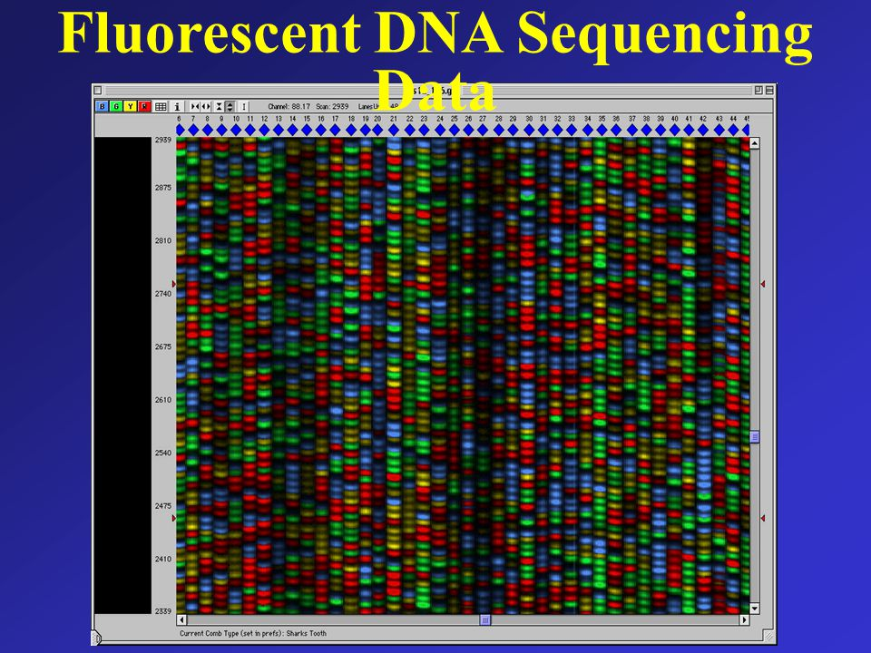 Fluorescent DNA Sequencing Data
