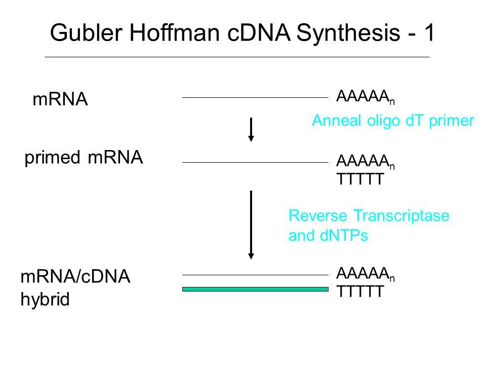 Gubler Hoffman cDNA Synthesis - 1