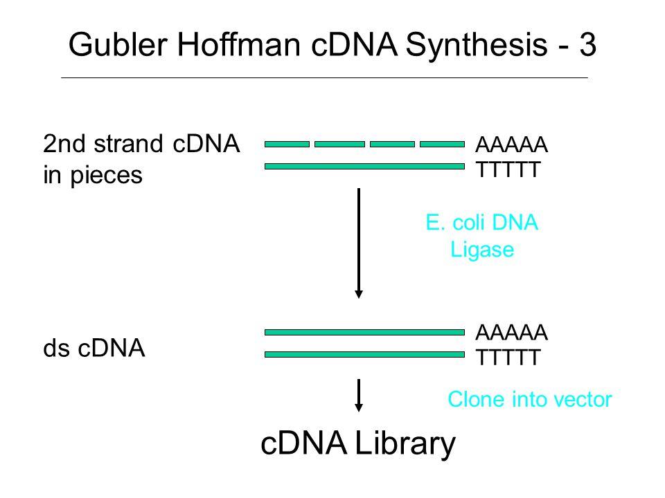 Gubler Hoffman cDNA Synthesis - 3