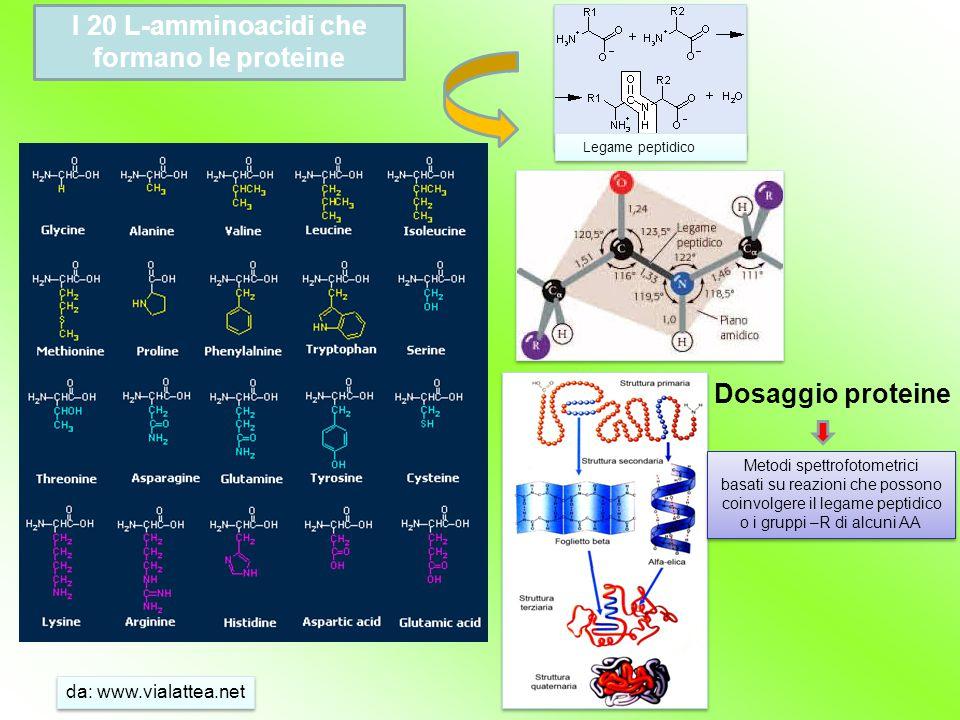 I 20 L-amminoacidi che formano le proteine