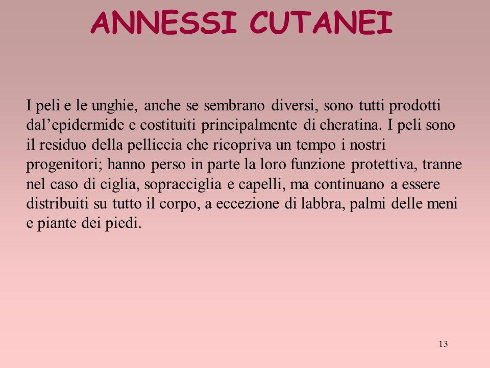ANNESSI CUTANEI