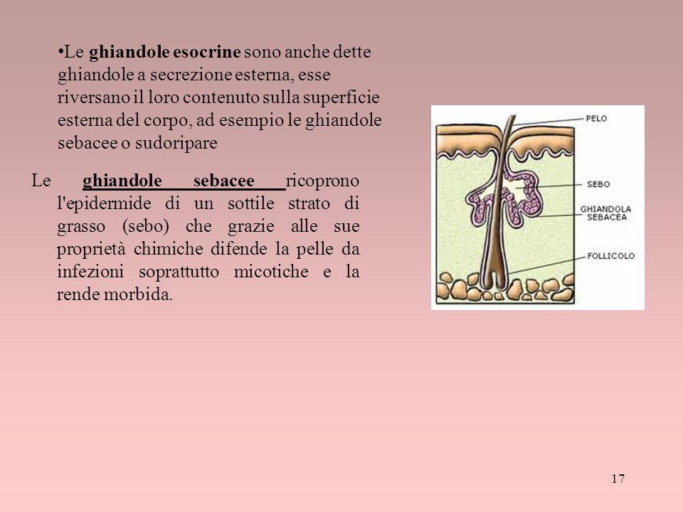 Le ghiandole esocrine sono anche dette ghiandole a secrezione esterna, esse riversano il loro contenuto sulla superficie esterna del corpo, ad esempio le ghiandole sebacee o sudoripare