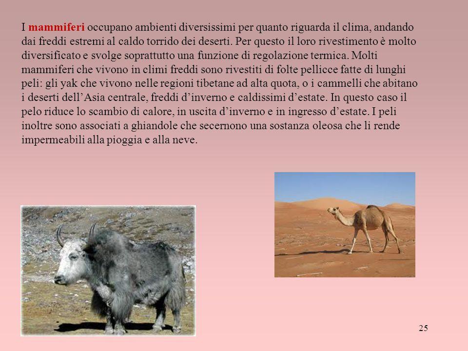 I mammiferi occupano ambienti diversissimi per quanto riguarda il clima, andando dai freddi estremi al caldo torrido dei deserti.
