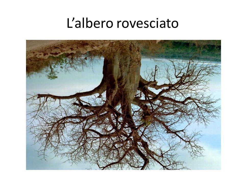 L'albero rovesciato