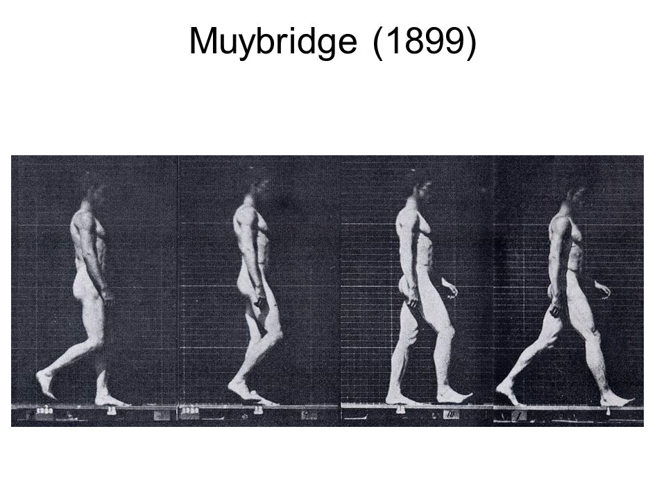 Muybridge (1899)