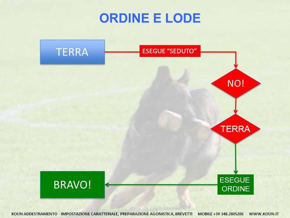 ORDINE E LODE TERRA BRAVO! NO! TERRA ESEGUE SEDUTO ESEGUE ORDINE