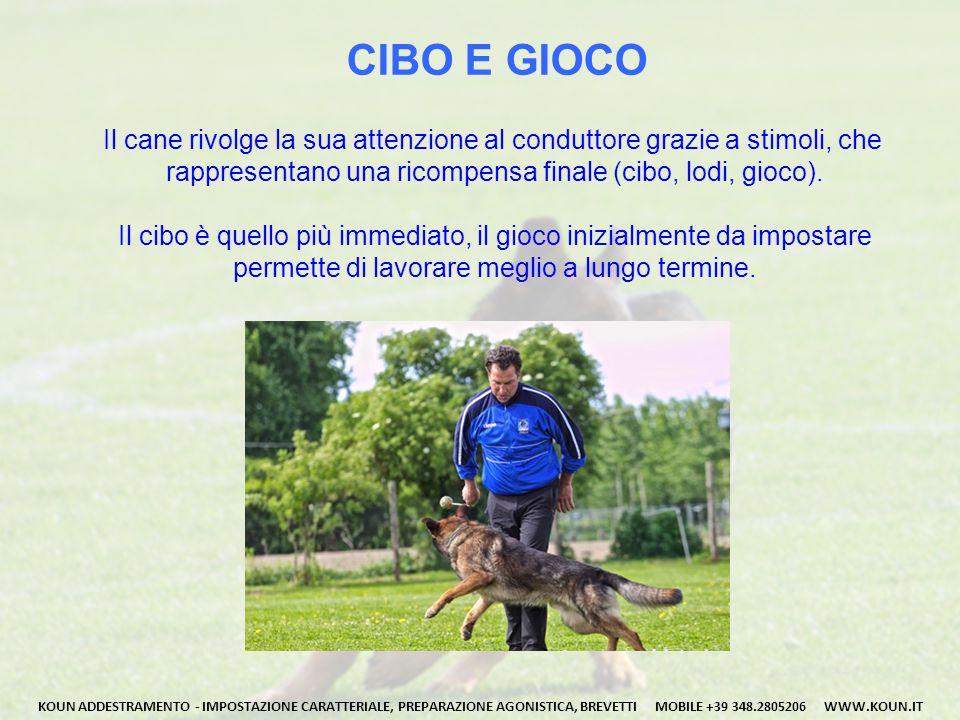 CIBO E GIOCO Il cane rivolge la sua attenzione al conduttore grazie a stimoli, che. rappresentano una ricompensa finale (cibo, lodi, gioco).