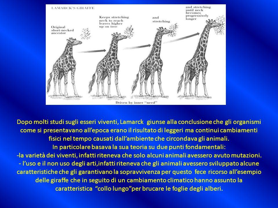 Dopo molti studi sugli esseri viventi, Lamarck giunse alla conclusione che gli organismi come si presentavano all'epoca erano il risultato di leggeri ma continui cambiamenti fisici nel tempo causati dall'ambiente che circondava gli animali.