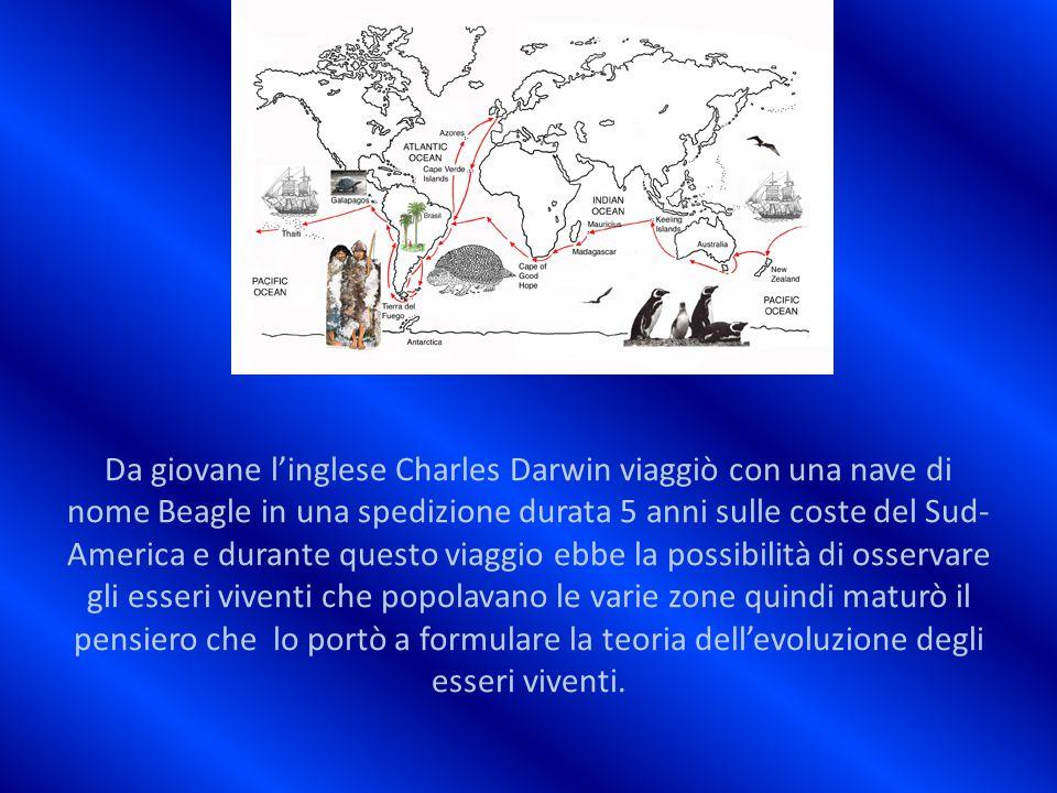 Da giovane l'inglese Charles Darwin viaggiò con una nave di nome Beagle in una spedizione durata 5 anni sulle coste del Sud-America e durante questo viaggio ebbe la possibilità di osservare gli esseri viventi che popolavano le varie zone quindi maturò il pensiero che lo portò a formulare la teoria dell'evoluzione degli esseri viventi.
