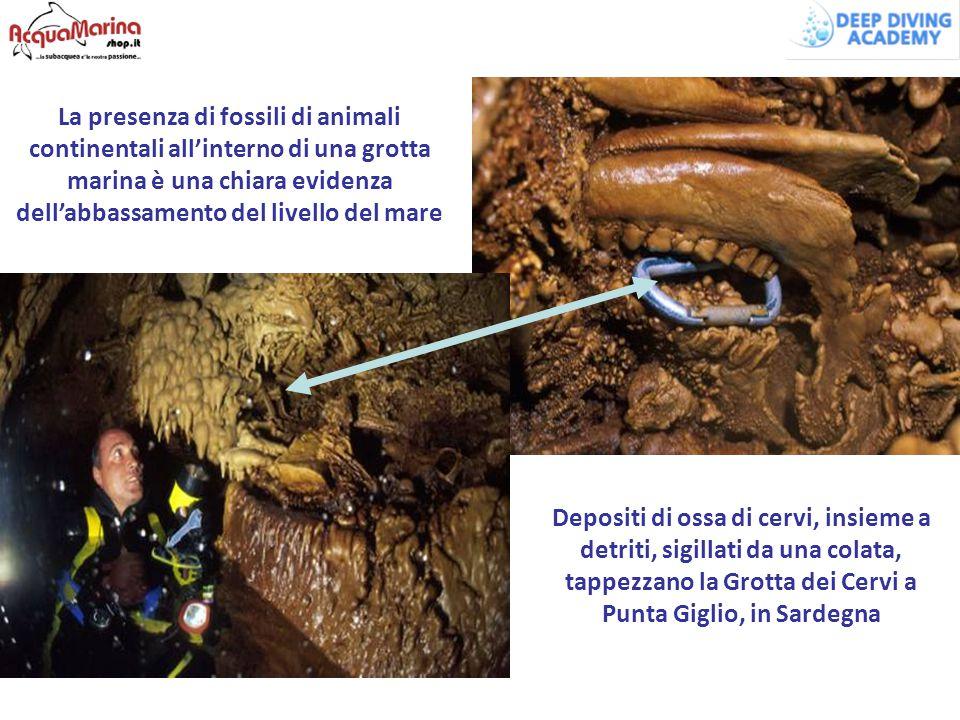 La presenza di fossili di animali continentali all'interno di una grotta marina è una chiara evidenza dell'abbassamento del livello del mare