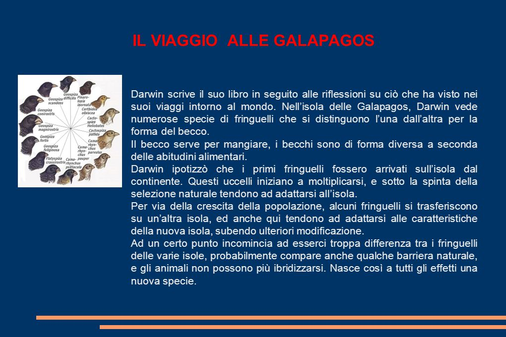 IL VIAGGIO ALLE GALAPAGOS