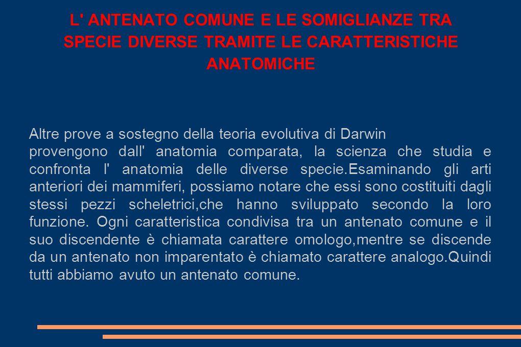L ANTENATO COMUNE E LE SOMIGLIANZE TRA SPECIE DIVERSE TRAMITE LE CARATTERISTICHE ANATOMICHE