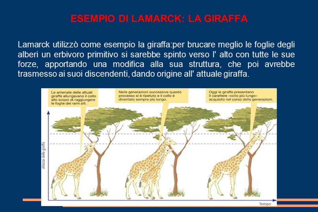 ESEMPIO DI LAMARCK: LA GIRAFFA