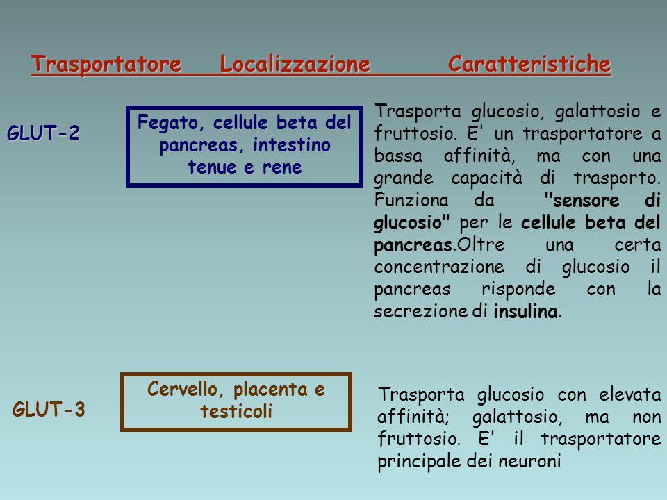 Trasportatore Localizzazione Caratteristiche