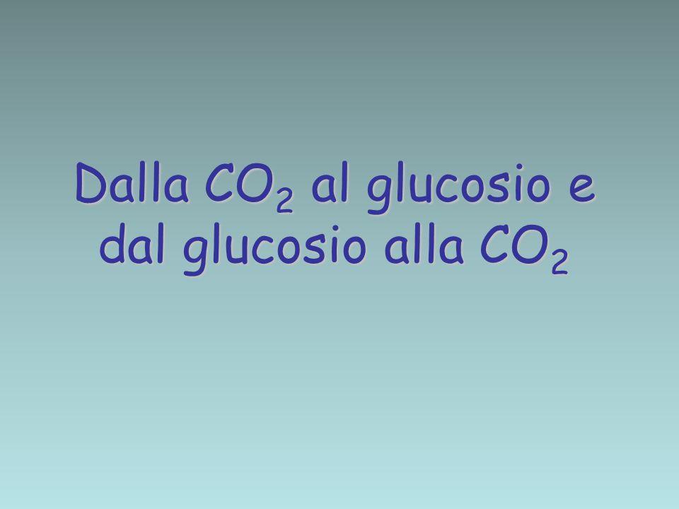 Dalla CO2 al glucosio e dal glucosio alla CO2
