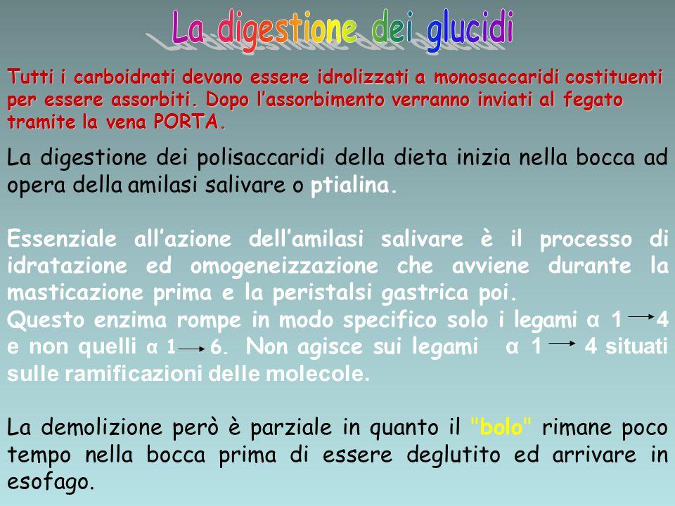 La digestione dei glucidi