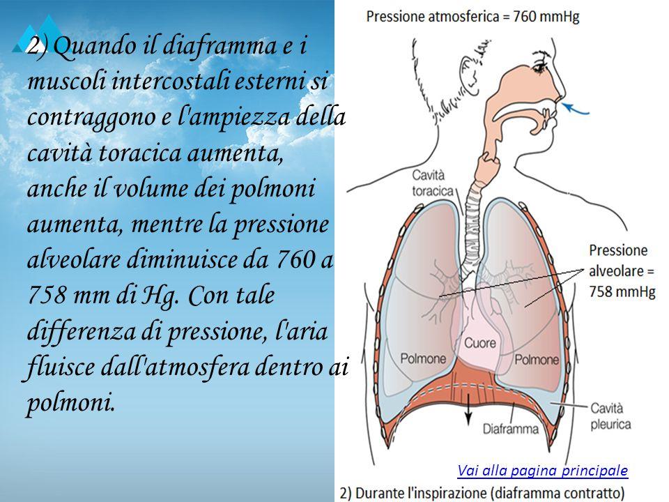2) Quando il diaframma e i muscoli intercostali esterni si contraggono e l ampiezza della cavità toracica aumenta, anche il volume dei polmoni aumenta, mentre la pressione alveolare diminuisce da 760 a 758 mm di Hg. Con tale differenza di pressione, l aria fluisce dall atmosfera dentro ai polmoni.