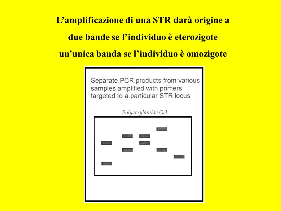 L'amplificazione di una STR darà origine a