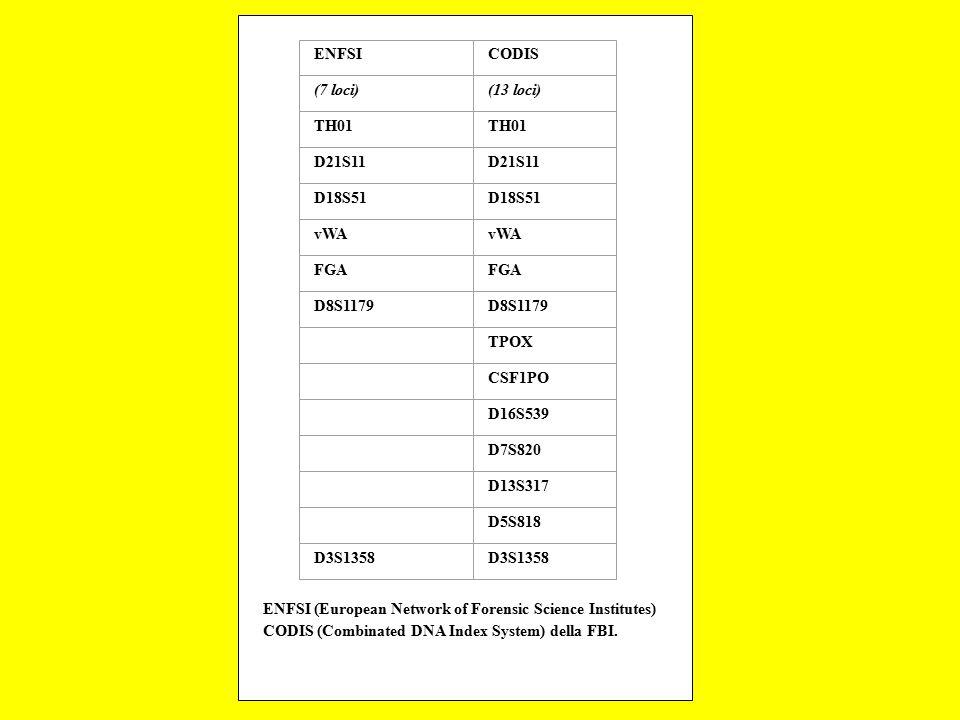 ENFSI CODIS. (7 loci) (13 loci) TH01. D21S11. D18S51. vWA. FGA. D8S1179. TPOX. CSF1PO.