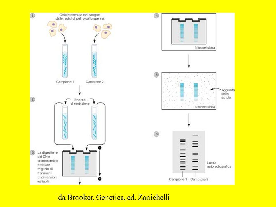 da Brooker, Genetica, ed. Zanichelli