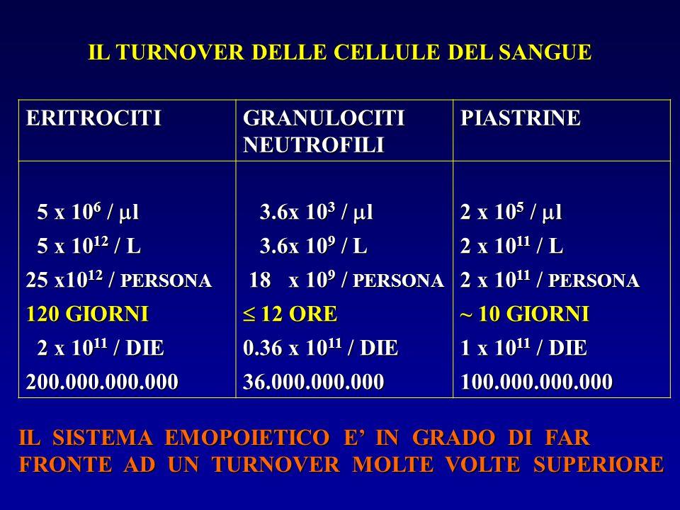 IL TURNOVER DELLE CELLULE DEL SANGUE