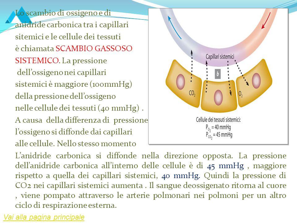Lo scambio di ossigeno e di anidride carbonica tra i capillari