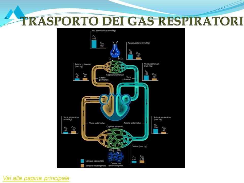 TRASPORTO DEI GAS RESPIRATORI