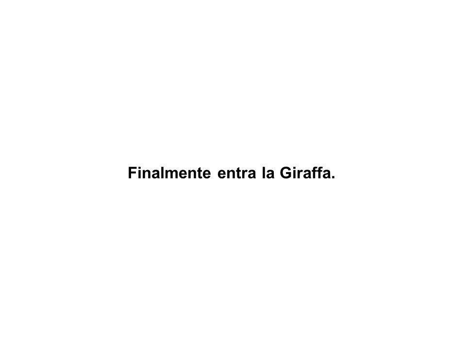 Finalmente entra la Giraffa.