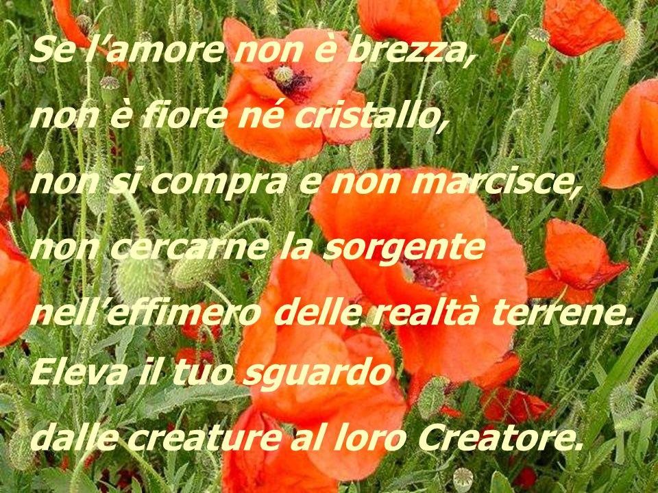 Se l'amore non è brezza, non è fiore né cristallo, non si compra e non marcisce, non cercarne la sorgente.
