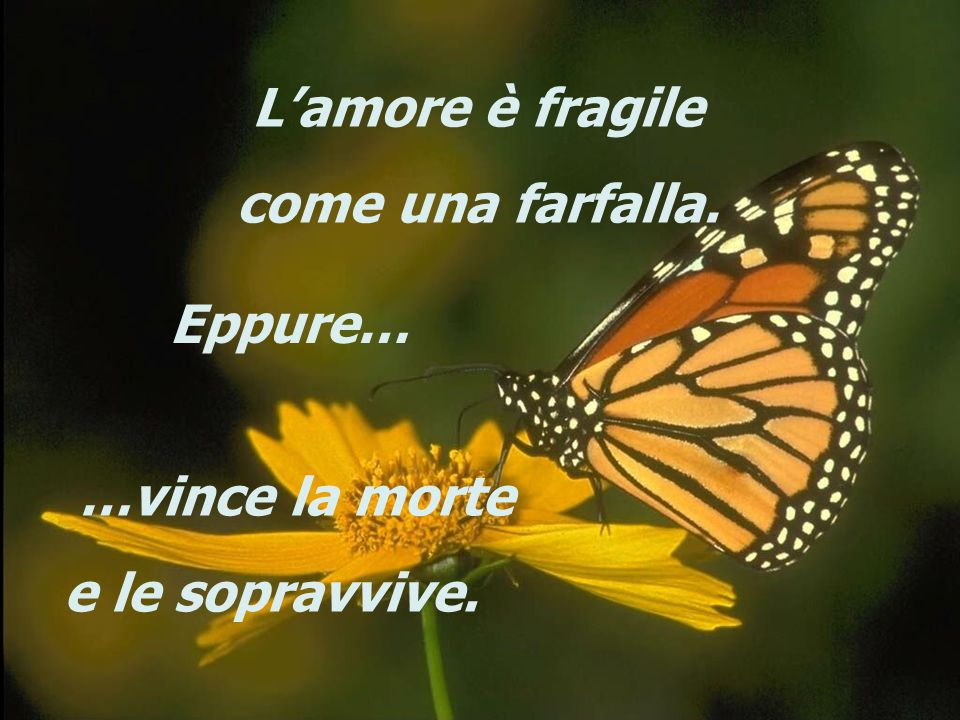 L'amore è fragile come una farfalla. Eppure… …vince la morte e le sopravvive.