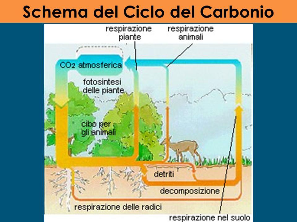 Schema del Ciclo del Carbonio