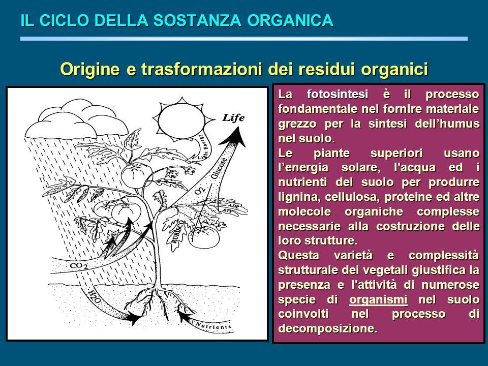 Origine e trasformazioni dei residui organici