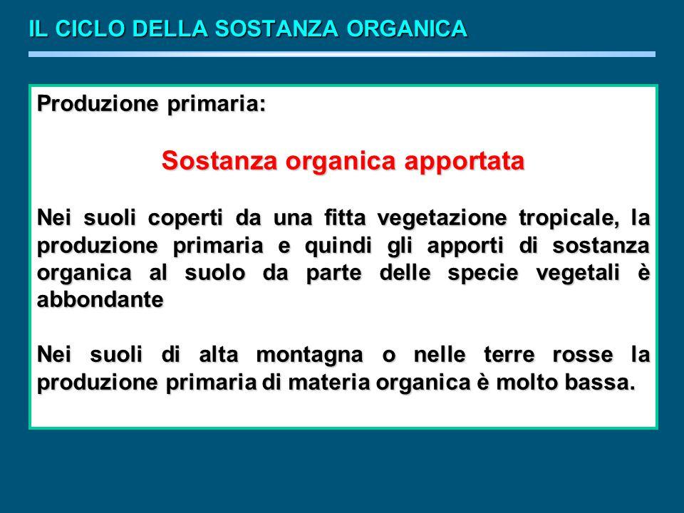 Sostanza organica apportata