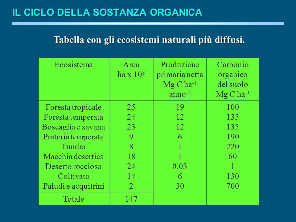 Tabella con gli ecosistemi naturali più diffusi.