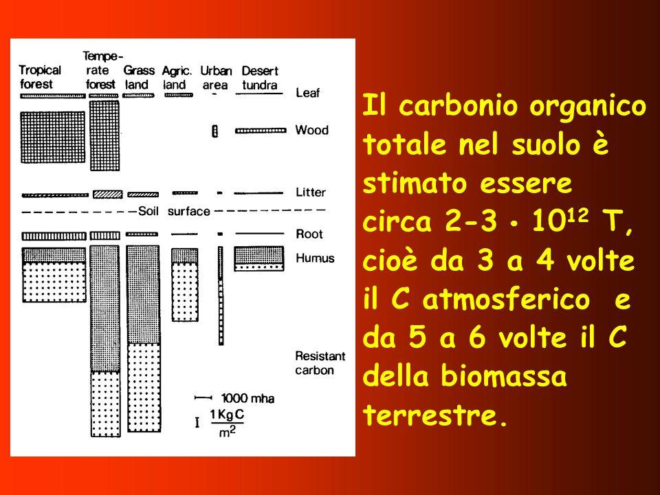 Il carbonio organico totale nel suolo è stimato essere circa 2-3  1012 T, cioè da 3 a 4 volte il C atmosferico e da 5 a 6 volte il C della biomassa terrestre.