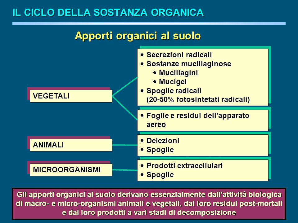Apporti organici al suolo