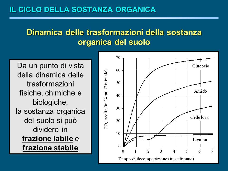 Dinamica delle trasformazioni della sostanza organica del suolo