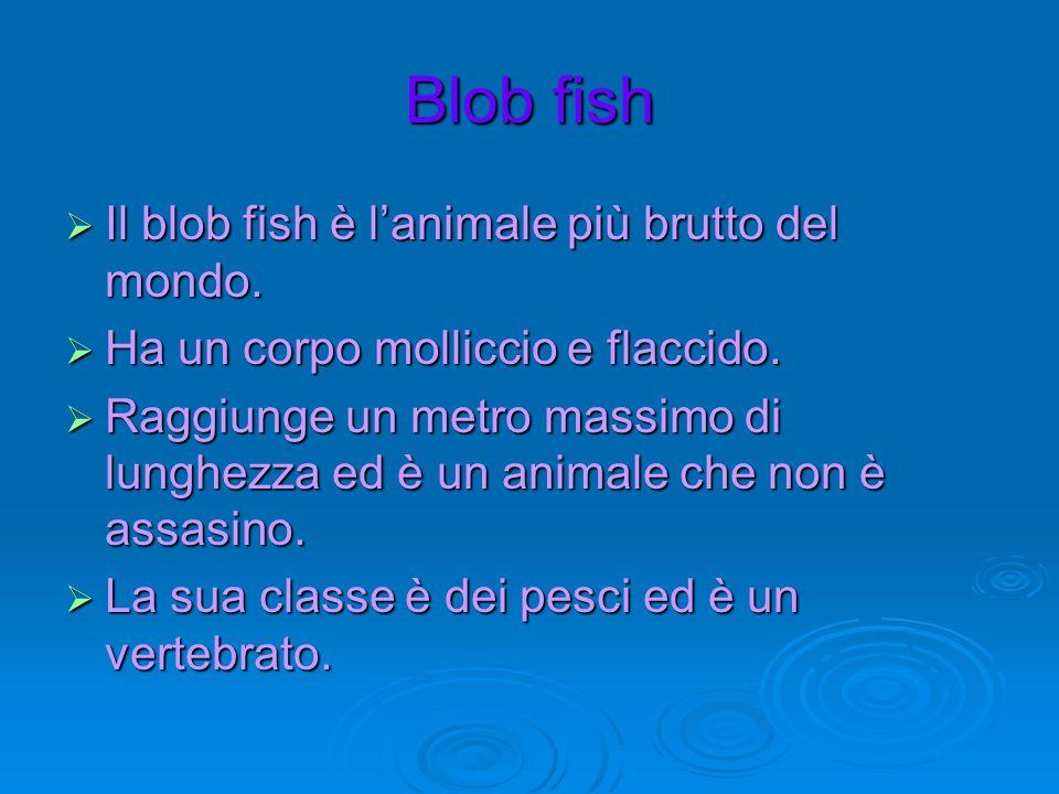 Blob fish Il blob fish è l'animale più brutto del mondo.