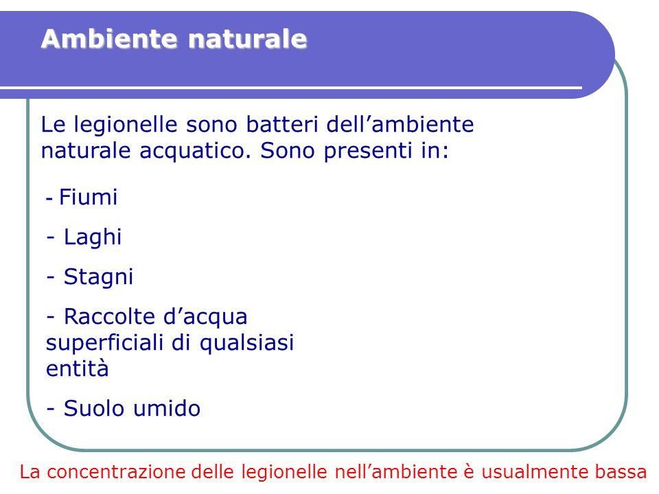 Ambiente naturale Le legionelle sono batteri dell'ambiente naturale acquatico. Sono presenti in: - Fiumi.