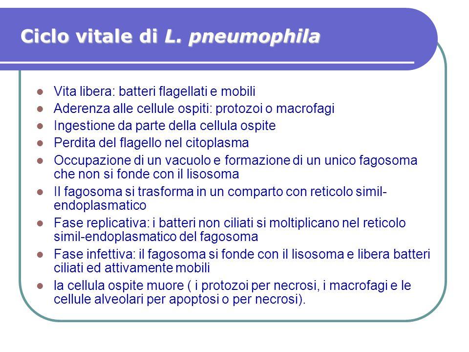 Ciclo vitale di L. pneumophila