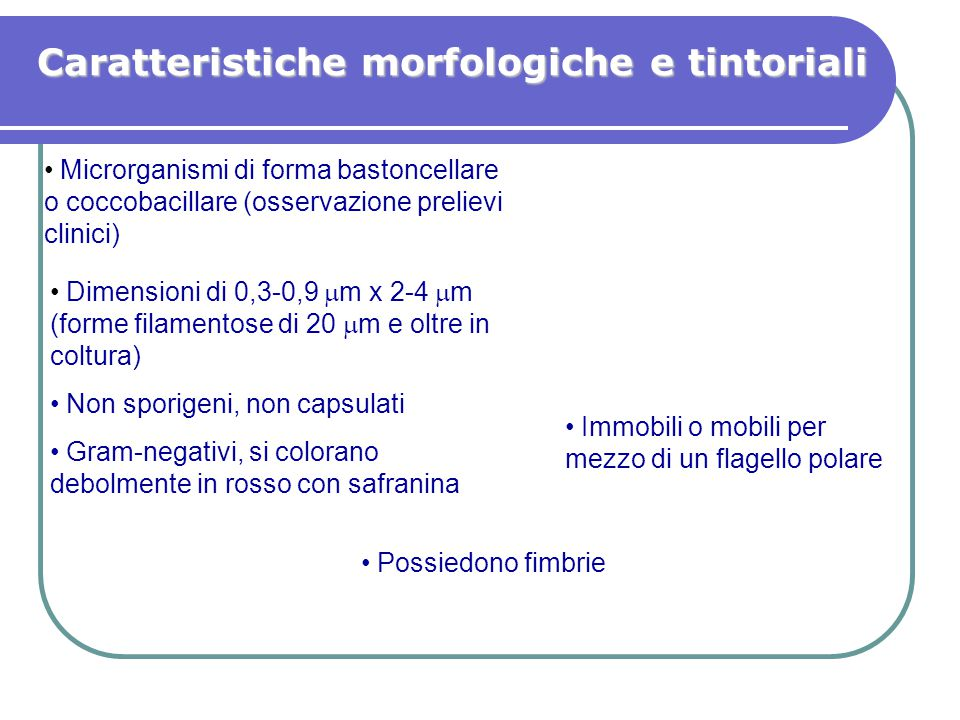 Caratteristiche morfologiche e tintoriali