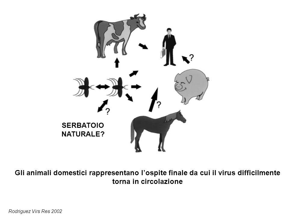 SERBATOIO NATURALE Gli animali domestici rappresentano l'ospite finale da cui il virus difficilmente torna in circolazione.