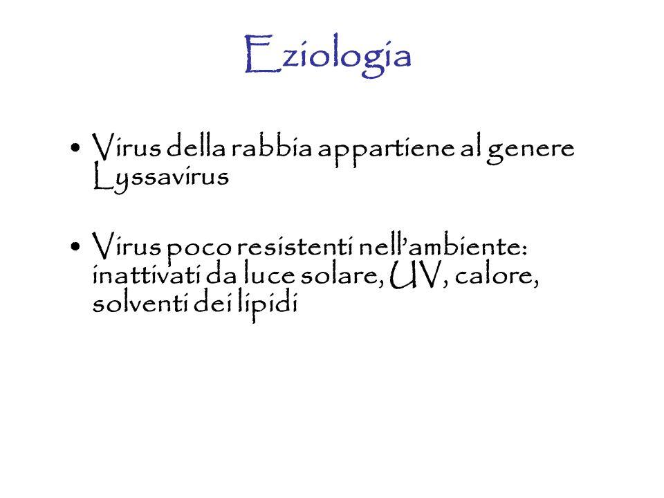 Eziologia Virus della rabbia appartiene al genere Lyssavirus