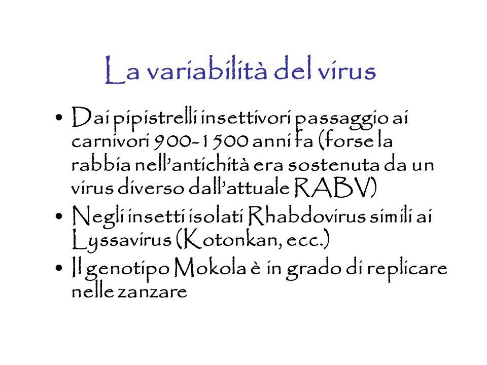 La variabilità del virus