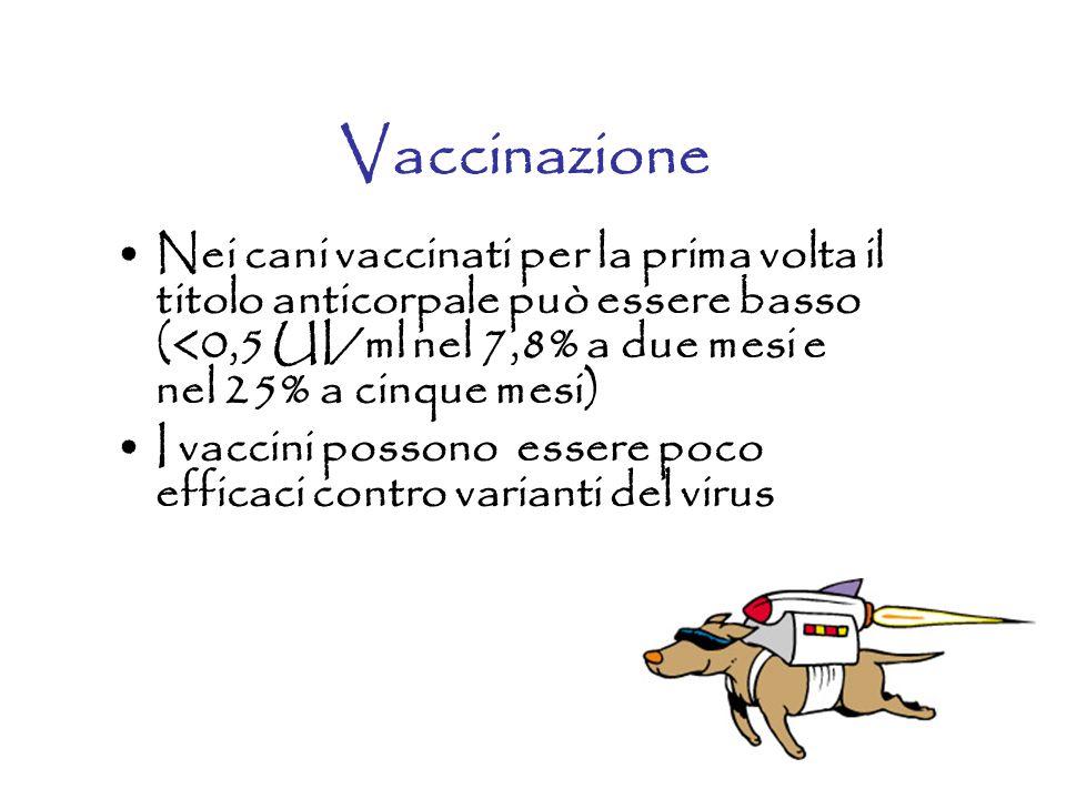 Vaccinazione Nei cani vaccinati per la prima volta il titolo anticorpale può essere basso (<0,5 UI/ml nel 7,8% a due mesi e nel 25% a cinque mesi)