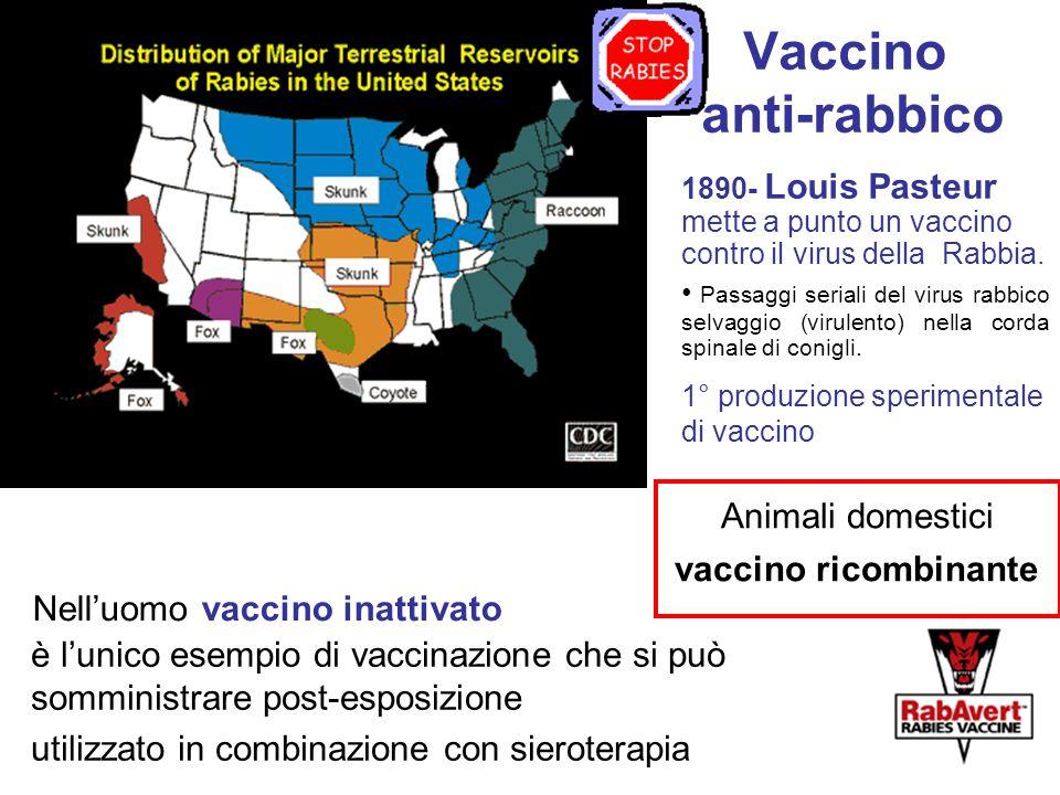 Vaccino anti-rabbico Animali domestici vaccino ricombinante