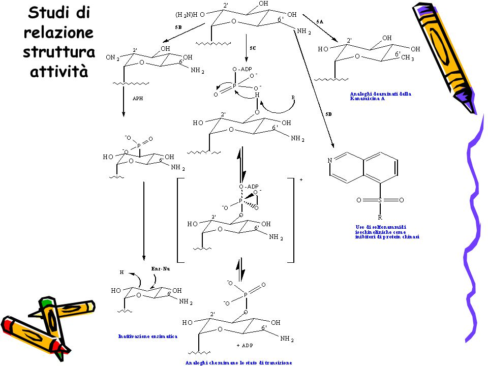 Studi di relazione struttura attività