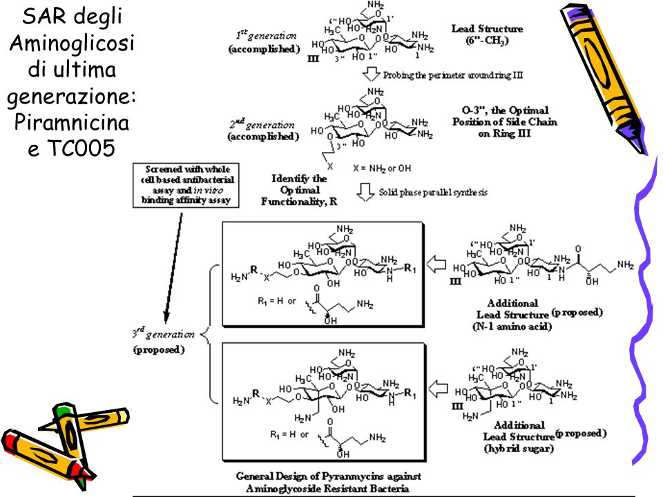 SAR degli Aminoglicosidi ultima generazione: Piramnicina e TC005